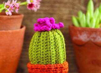 knappe cactus