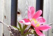 bloemenhanger